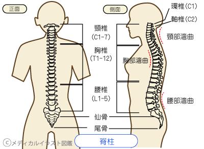 腰痛について